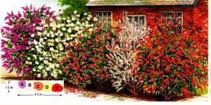 Изгородь из душистых кустарников, схема