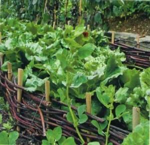 Овощные модули в стиле кантри, фото