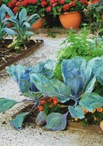 Овощи в модульном огороде, фото