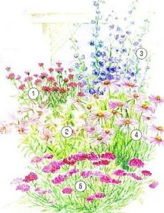 Цветник с лилиями, фото