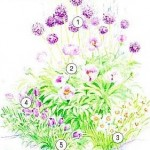 Цветник с луковичными растениями
