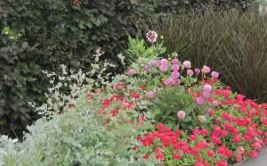 Листва в качестве нейтрального фона цветника, фото