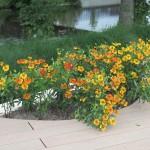 Растения на террасе
