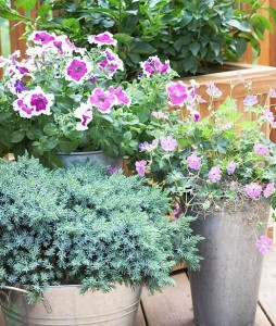 цветы в контейнерах на террасе, фото