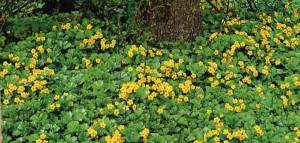 Почвопокровные растения в саду, фото
