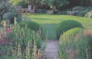 Выбор растений для участка, фото