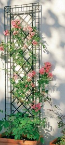 Решетка для плетистых роз, фото