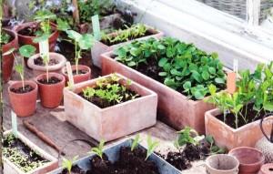 Выращивание рассады, фото