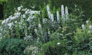 Белый цвет в саду, фото