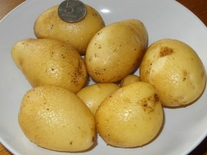 Картофель на балконе, фото