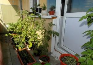 Овощи на балконе, фото