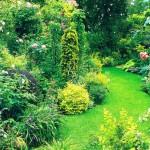 Палитра небольшого сада