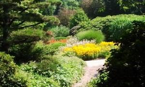 Растения - материал для создания сада, фото