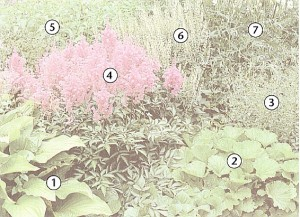 Схема посадки растений, фото