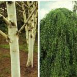 Описания растений