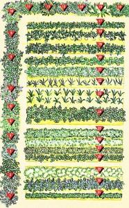Схема огорода с пряными травами, фото
