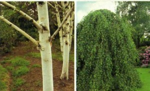 деревья, фото