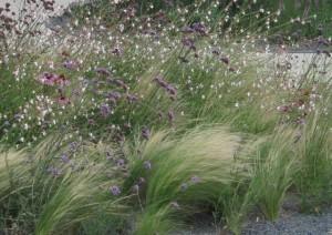 Декоративные злаки и травы, фото
