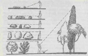 Схема посадки дерева, фото