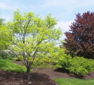 Маленькие деревья, фото