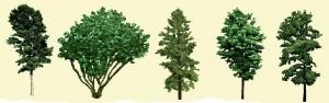 Небольшие деревья, фото