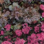 Как оживить сад почвопокровными растениями