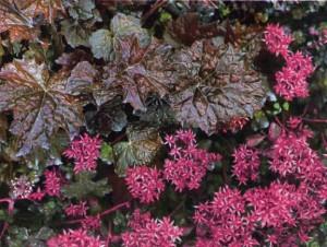 Почвопокровные в дизайне сада, фото