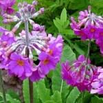 Выбор растений для сложных участков в саду