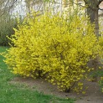 Ранняя весна в саду