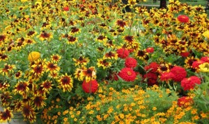 Краски августа в саду, фото