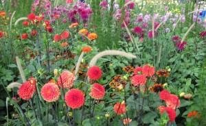 Красный цвет в саду, фото