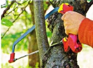 Обрезка деревьев в саду, фото