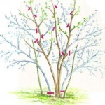 Осенняя обрезка растений в саду