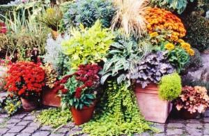 Осенние растения на террасе, фото