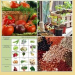 Огород в таблицах: практикум для садоводов