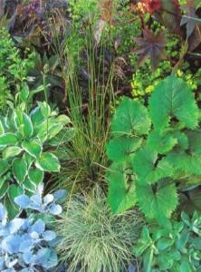 Разнообразие декоративно-лиственных растений, фото
