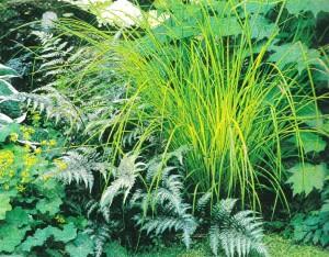 Архитектурные растения в дизайне сада, фото