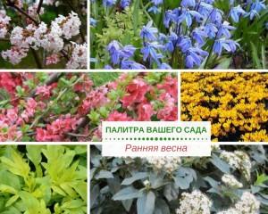 Краски ранней весны в саду, фото