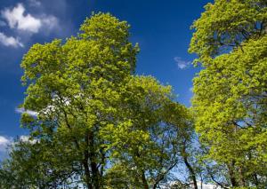 Весенняя листва на деревьях, фото