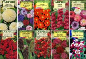 Сроки посева семян цветов
