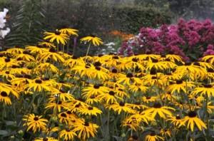 Советы по планированию цветников, фото