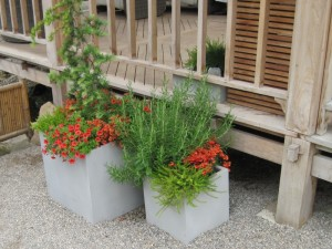 Растения на мощении, фото