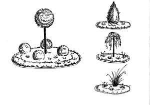 Растение для центра круглой клумбы, рисунок