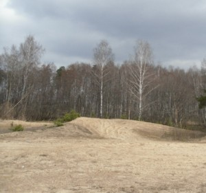 Участок на песчаной почве, фото