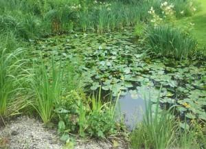 Сад-водоем, фото