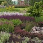 Сад-мечта — для отдыха и коллекционирования растений