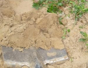 Посадка растений в песчаную почву, фото