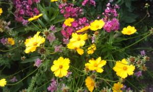 Цвет в вашем саду, фото