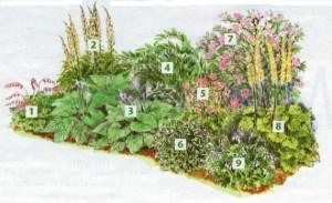 Цветник для тенистого места в саду, фото